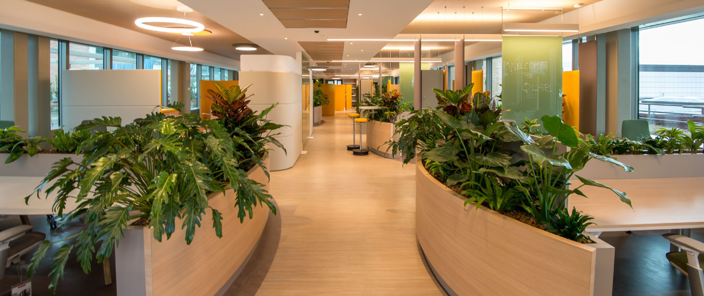 Corporate colours and biophilia at the ESA client office